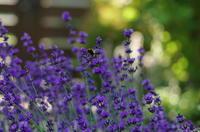 *庭の記録~静かな夏の庭* - bee !bee!!bee!!!
