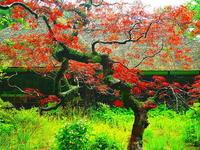 梅雨空の紅 - 風の香に誘われて 風景のふぉと缶