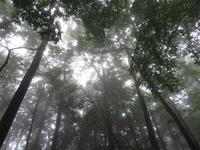 かろうじて初ミヤマ(2019/07/08ミヤマ♂1) - むしとりだいすき