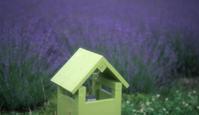 lavender - feel a season