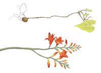 スケッチ  赤い花、君の名は? - 糸巻きパレットガーデン
