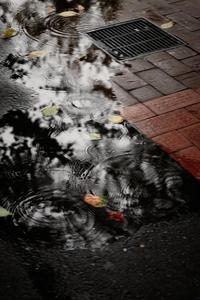 Singin' In The Rain #8 - 夢幻泡影