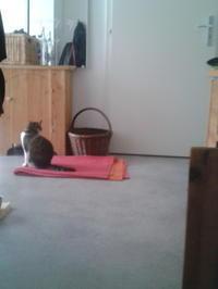 田舎の家で猫シッター - コルマール街暮らし