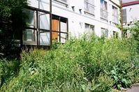 猛々しい雑草と廃アパートと解体作業 - 照片画廊