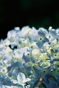 長居植物園 - photomo