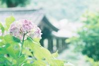 長谷寺 その1 - photomo