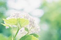 神戸森林植物園 その1 - photomo