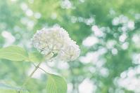 神戸森林植物園 その2 - photomo