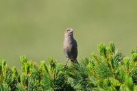 再びお山へ♪ - 北の大地で野鳥ときどきフライフィッシング