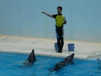 須磨海浜水族館②~イルカショーと、キティ来援 - ミモザアカシアの日々