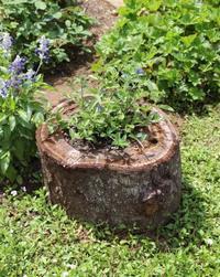 DIY♪古木で鉢作り - ペコリの庭 *