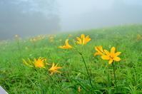 日光、①霧降高原 - つれづれ日記