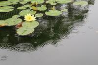 梅雨の水辺 - 木洩れ日 青葉 photo散歩