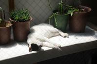 寝子3 - 鳥会えず猫生活