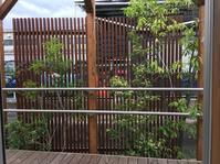 モデルガーデン - ☆☆☆京都を中心にエクステリア&ガーデンのプロショップ☆☆☆マサミガーデン