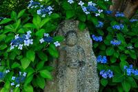 夏の花・蓮と桔梗(元興寺) - 花景色-K.W.C. PhotoBlog