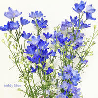 Delphinium blues  デルフィニウム ブルー - teddy blue