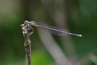洗礼の日 - 蝶と蜻蛉の撮影日記