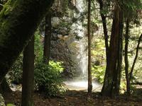 『岩戸の観音滝と金華山登山道ミニ散策~』 - 自然風の自然風だより