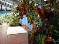 もうすぐ、夏休みイベント2019 - 手柄山温室植物園ブログ 『山の上から花だより』