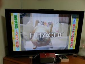 笑い療法士 - 柴犬 ひろゆきと さもない毎日&週末自宅カフェ里音 (りをん) 一之江・笑い療法士のいるカフェ・   趣味好房 織