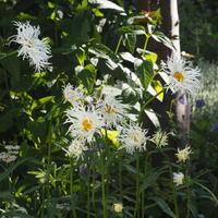 ガーデン7月 - sola og planta ハーバリストの作業小屋
