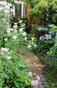 初夏~夏の宿根草たち&満開のモナルダ - miyorinの秘密のお庭