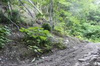 札幌岳 - 四季のうつろい