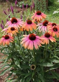 たまには文句を言わせて!造花問題 - ペコリの庭 *