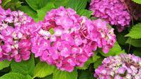 紫陽花 - 手作りフラメンコアクセサリー通販ショップSharifa(シャリファ)のブログ