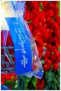 夏の風物詩☆ほおずき市 -  one's  heart