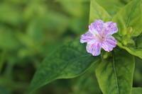 土の中のヤマカガシ、理由がわかりました。 - 週刊「目指せ自然農で自給自足」