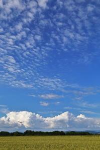 ひろーい空に「夏と春」~旭川空港~ - 自由な空と雲と気まぐれと ~from 旭川空港~
