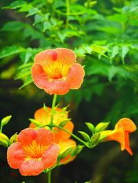 鎌倉梅雨季節の花 - 風の香に誘われて 風景のふぉと缶
