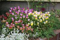 花壇に夏の花を - my small garden~sugar plum~