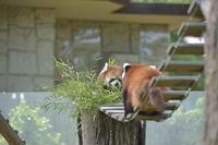 クルミ親子 - 動物園へ行こう