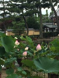 蓮の花 - 京都西陣 小さな暮らし