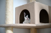 キャットタワーの話、二つ - 猫と夕焼け