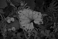 モノクロームな葉 - フォトな日々