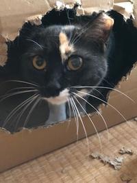 珍客あらわる - 愛犬家の猫日記