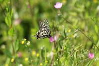 花 と 虫 (12) - 野山の住認たち Ⅲ