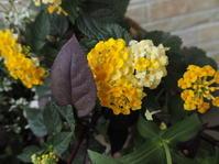 7月の庭vol.3 - グリママの花日記