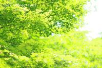 この光、この葉の下でどんなだったか - from自由が丘 ベビー・キッズ・マタニティ・家族の出張撮影、say photography