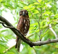 やっと巣篭もり中のお母さんが出てきたよう・・・ - 一期一会の野鳥たち