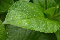 雨の朝 - 閑話休題