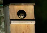 モモンガ - くまさんの二人で鳥撮り