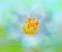 ナツツバキ 4 - 光 塗人 の デジタル フォト グラフィック アート (DIGITAL PHOTOGRAPHIC ARTWORKS)