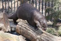 2019/05/03-05 ノボシビルスク動物園16 ユーラシアカワウソ長屋 - 墨色の鳥籠