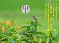午後から雨が降ってきた! - Weblog : ちー3歩 Ⅱ