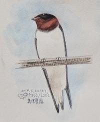 #野鳥スケッチ #ネイチャー・ジャーナル 『燕』 Hirundo rustica - スケッチ感察ノート (Nature journal)